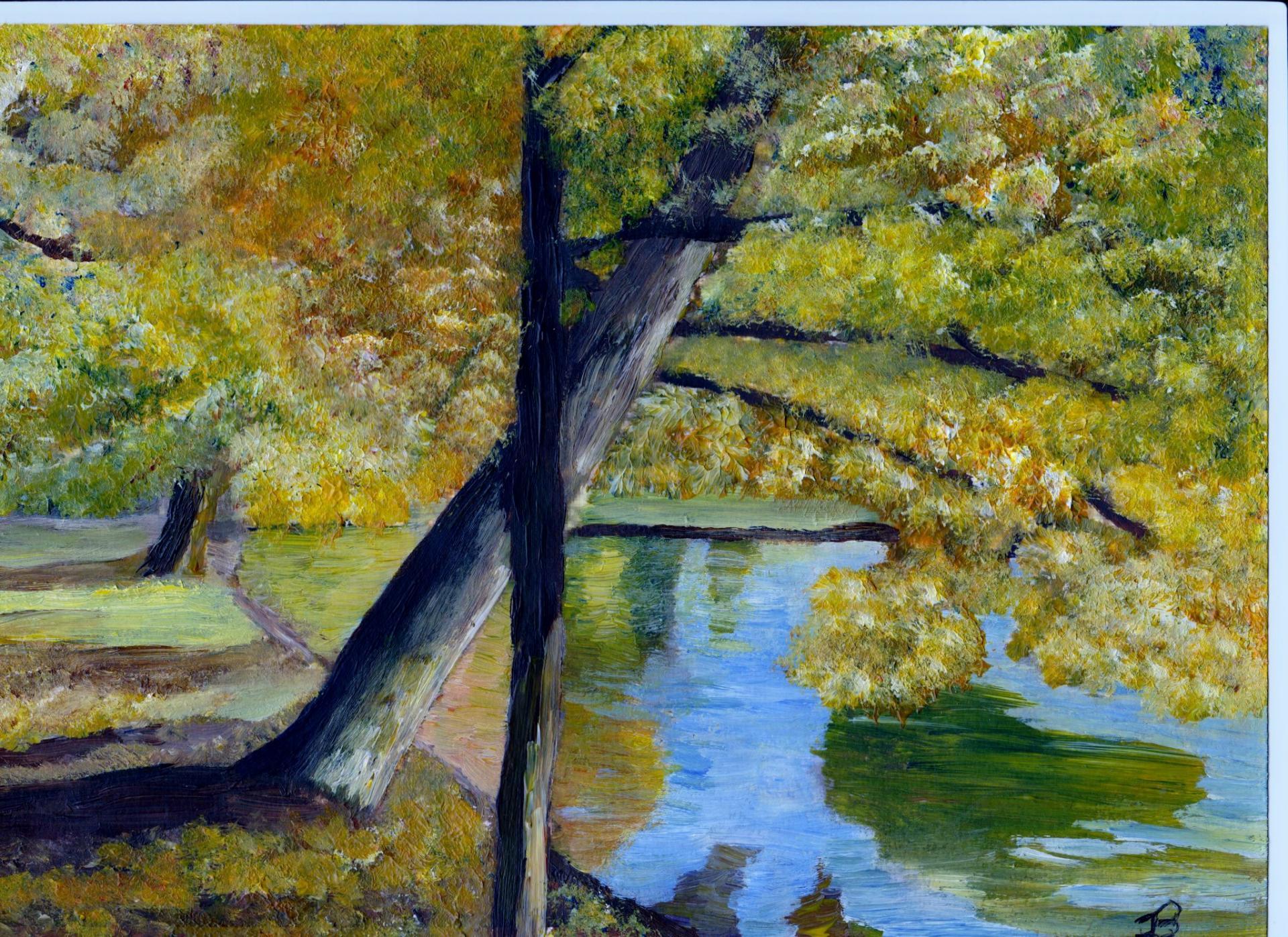 Feuillage d automne au bord de l eau